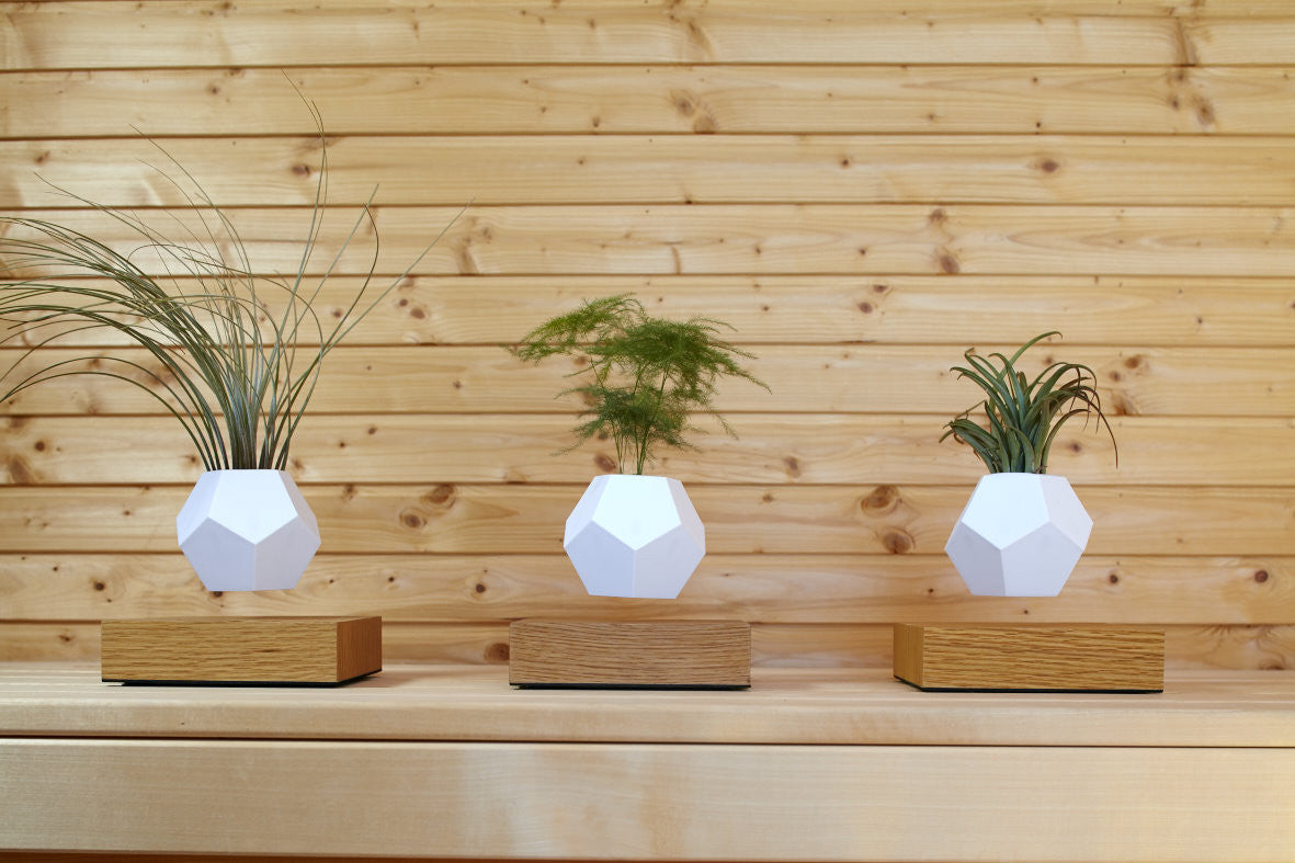 Lifestyle photo with 3 LYFE levitating planters in a row on a wooden background