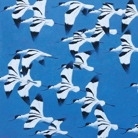 Avocets, China Fleet
