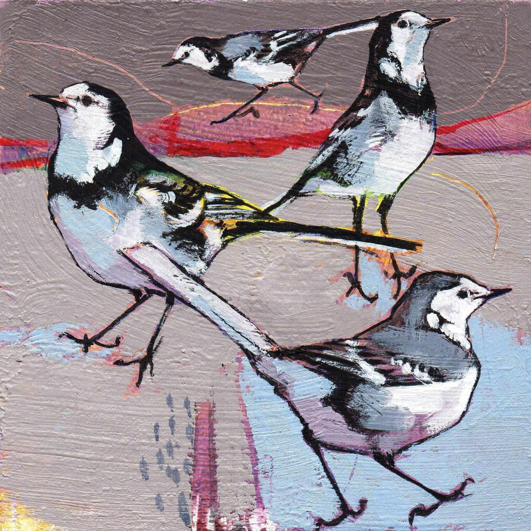 Pied Wagtails by Daniel Cole, Fine Art Greeting Card, Oil on Board, Four wagtails