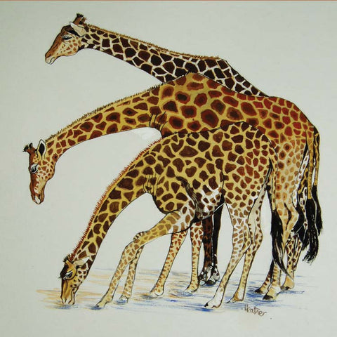 Fine Art Greeting Card, Watercolour, Three giraffes