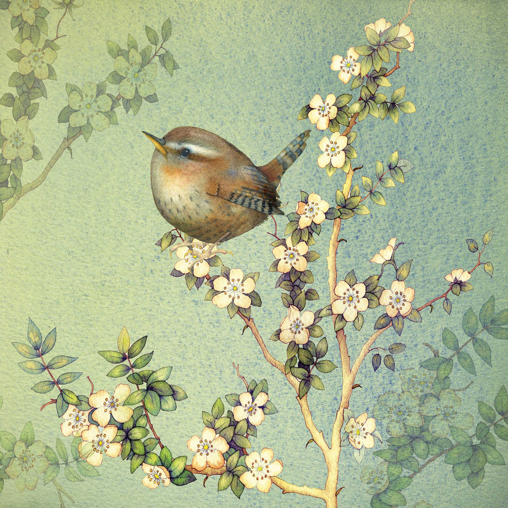 Tiny Wren by Kate Green, Art Greeting Card, Mixed Media, A tiny wren on blossom branch