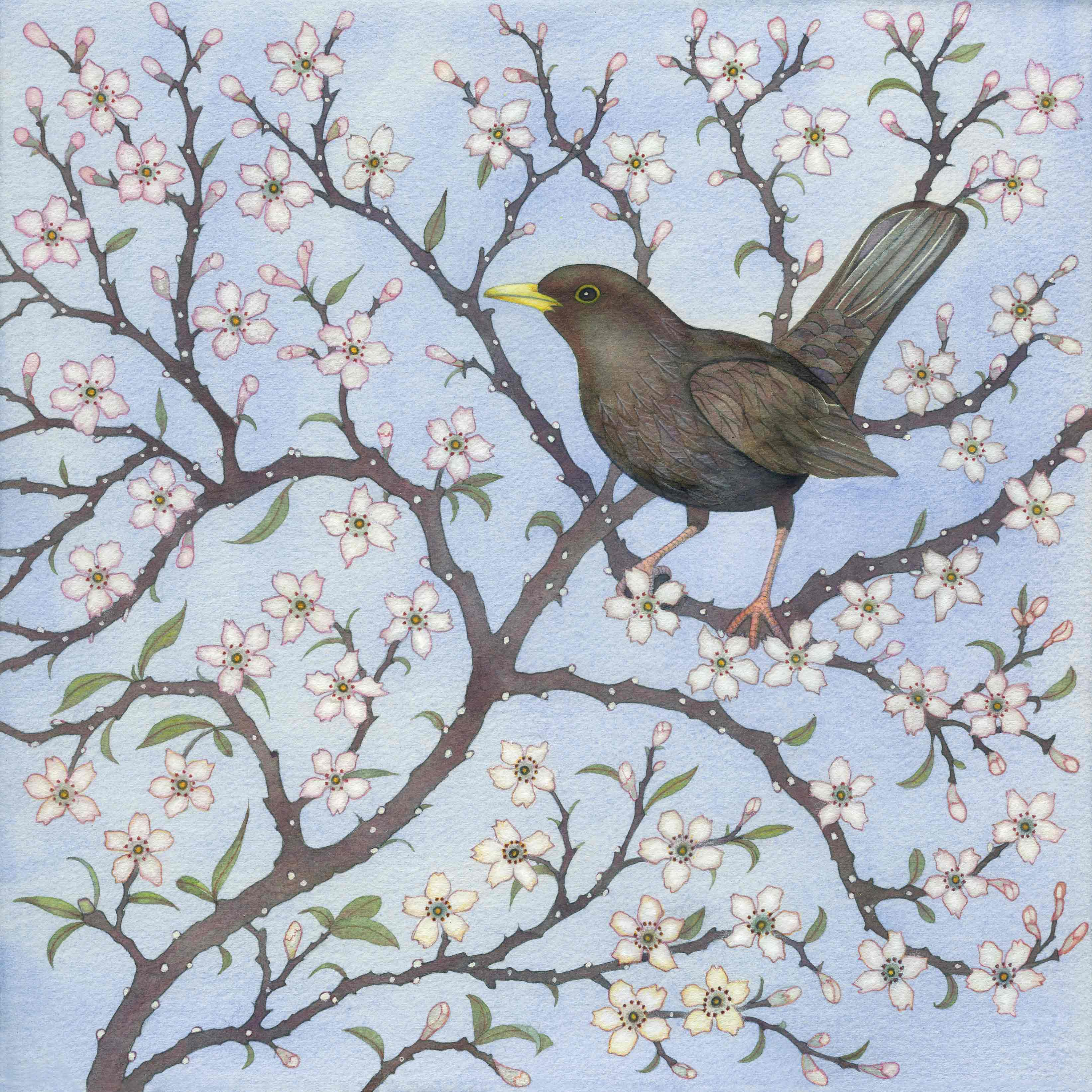 Fine Art Greeting Card by Kate Green, Mixed Media, Blackbird in the blossom