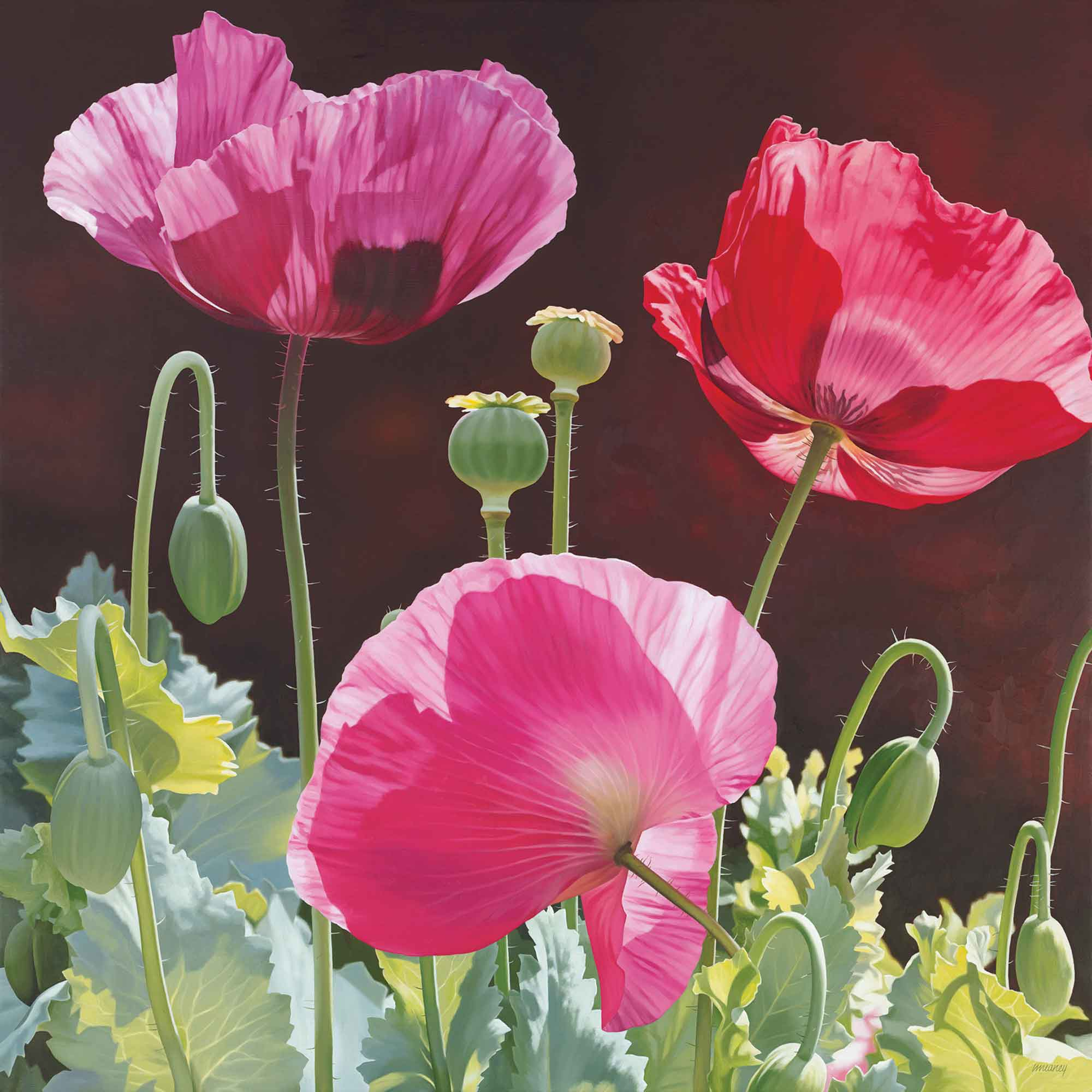 Poppy Garden by Linda Alexander, Fine Art Greeting Card, Oil, Poppies in sunlight