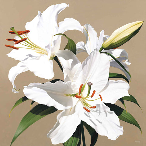 White Lily II by Linda Alexander, Fine Art Greeting Card, Oil, White lily