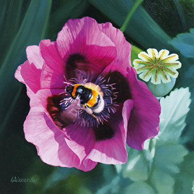 Art Greeting Card by Linda Alexander, Poppy with Bee, Oil painting, poppy and bee