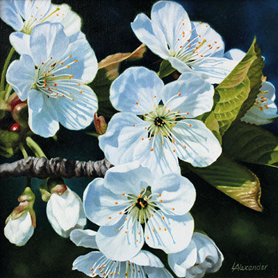 Art Greeting Card by Linda Alexander, Cherry Blossom, Oil painting, cherry blossom close up