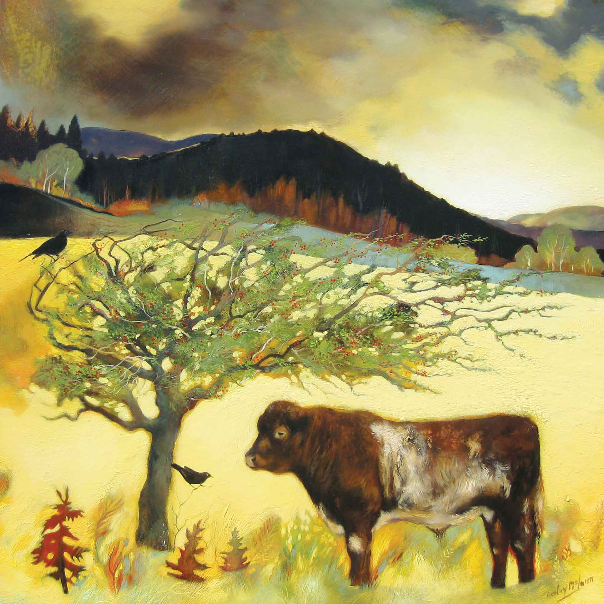 Shorthorn under a Hawthorn by Lesley McLaren, Fine Art Greeting Card, Oil, Bull under a tree