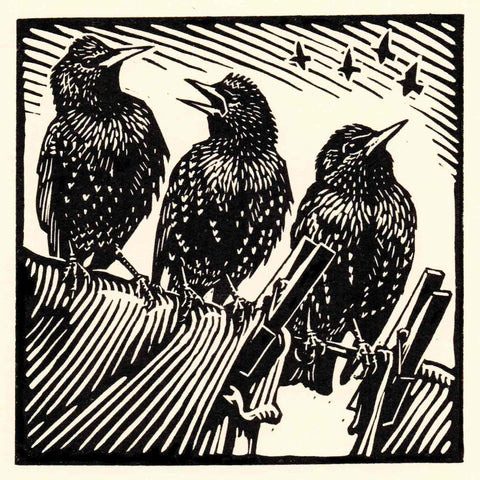Art Greeting Card by Richard Allen, Starlings, Linocut, Three starlings on washing line