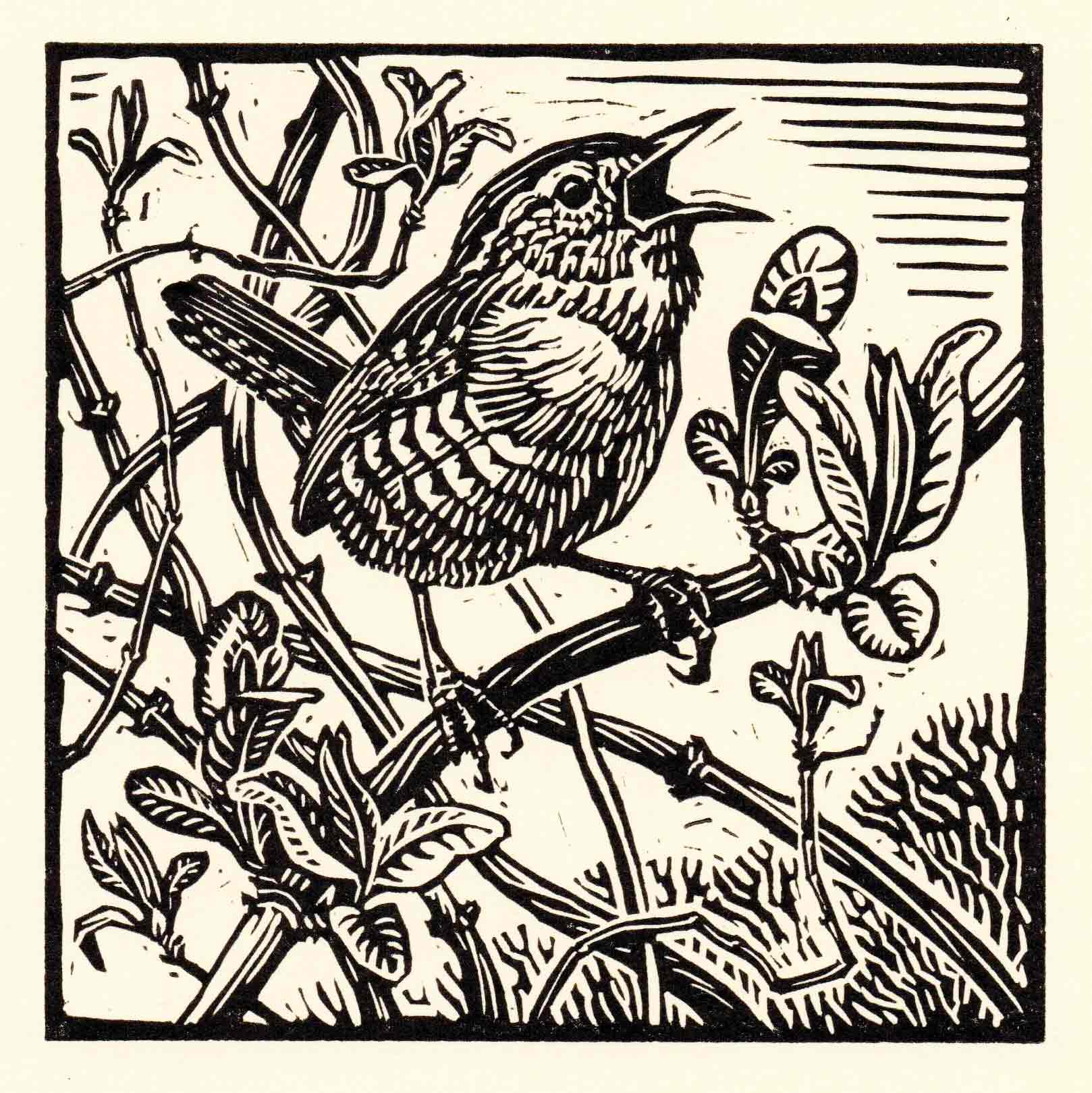 Art Greeting Card by Richard Allen, Wren, Linocut, Wren singing on branch