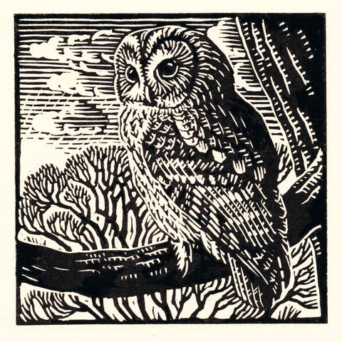 Art Greeting Card by Richard Allen, Linocut, Tawny owl on branch
