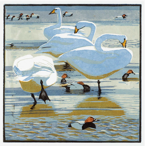 Art Greeting Card, Woodcut, Swans and pochards