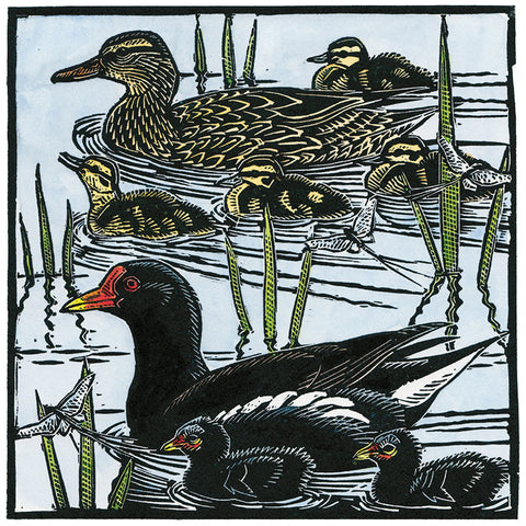 Art Greeting Card by Richard Jarvis, Moorhens, Mallards and Mayflies, Linocut