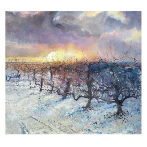 Fine Art Greeting Card, Sunset over apple trees