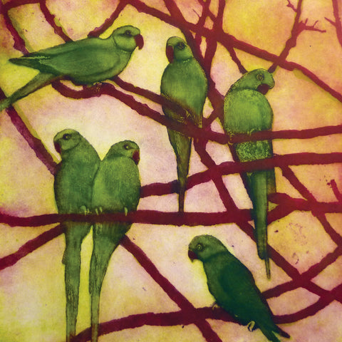 City Birds by Susie Perring, Art Greeting Card, Aquatint, Green parakeets in tree