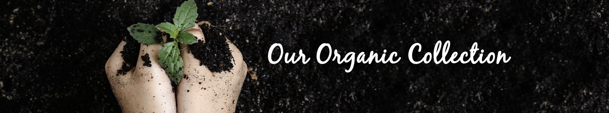 Our Organic Collection