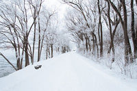 Winter Road Trees Wall Decal