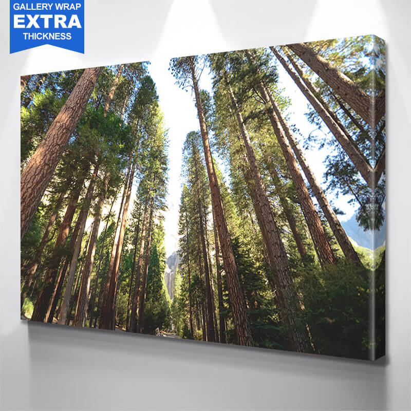 Yellowstone Tree Path Wall Art Canvas Art