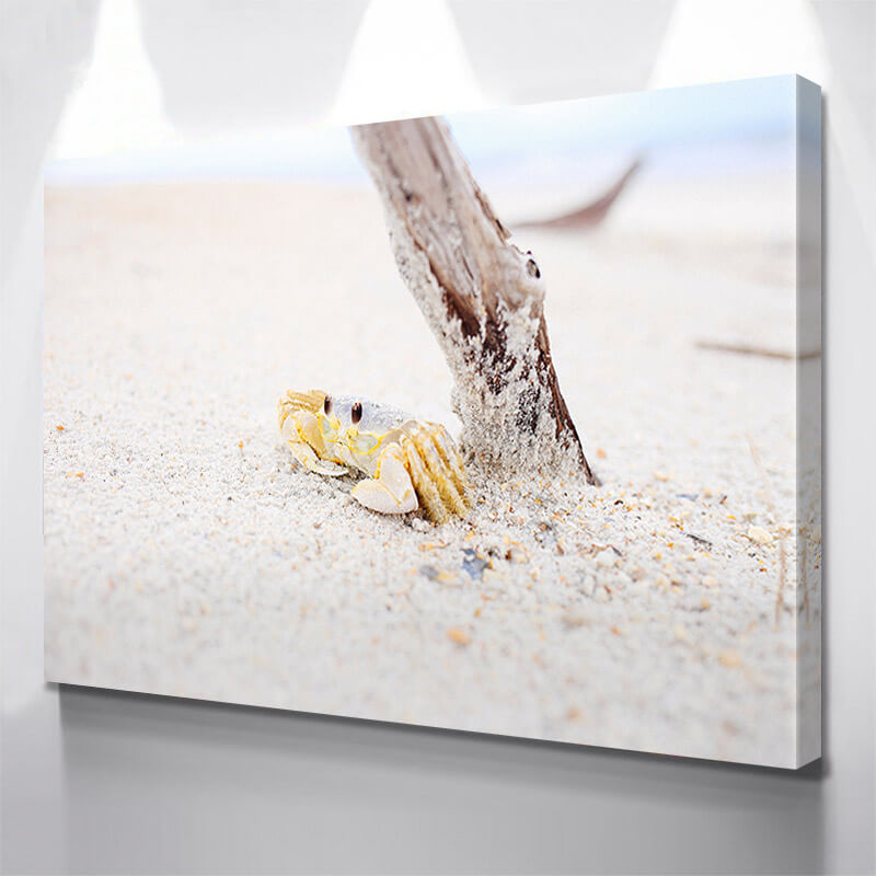 Beach Crab Wall Art Canvas Art