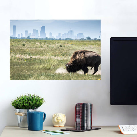 Denver Colorado Buffalo Skyline Wall Art Wall Decal Wall Art