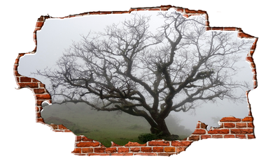 Zapwalls Decals Lonely Foggy Tree Breaking wall Nature