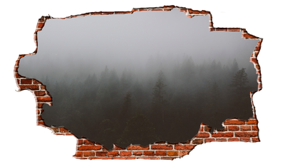 Zapwalls Decals Morning Forest Cloudy Sky Breaking wall Nature