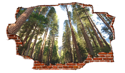 Zapwalls Decals Yellowstone Tree Path Breaking wall Nature