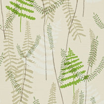 Athyrium Hessian Apple and Pebble Wallpapers