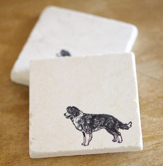 Border Collie Coasters