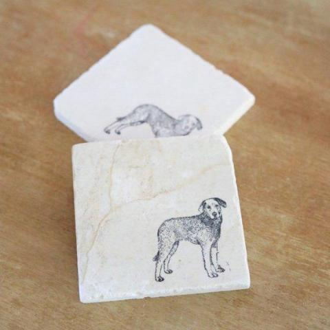 Chesapeake Bay Retriever Coasters