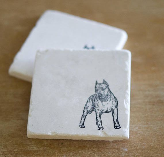Pit Bull (cropped ears) Coasters
