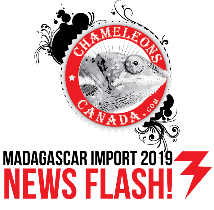 Is Madagascar Closed for Imports?