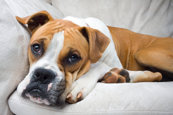 Tips for Controlling Pet Odors