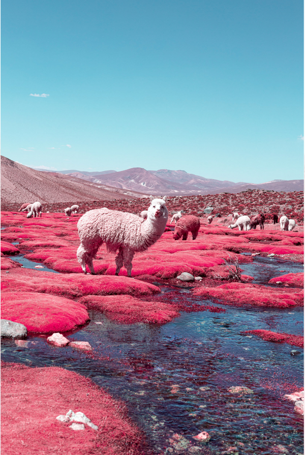 "INFRARED - Paolo Pettgiani makes us see ""INFRARED"""