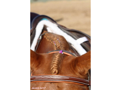 Getting Your Horse Spring Ready