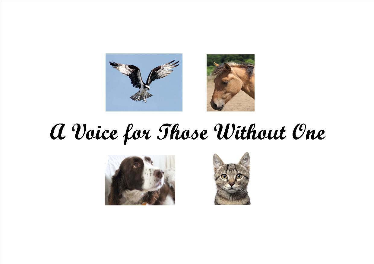 A Voice for Those Without One