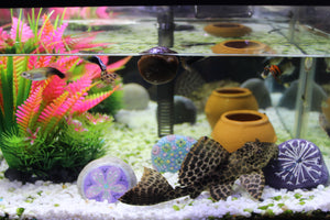 The Water Cleanser Aquarium Balls (4 ct)