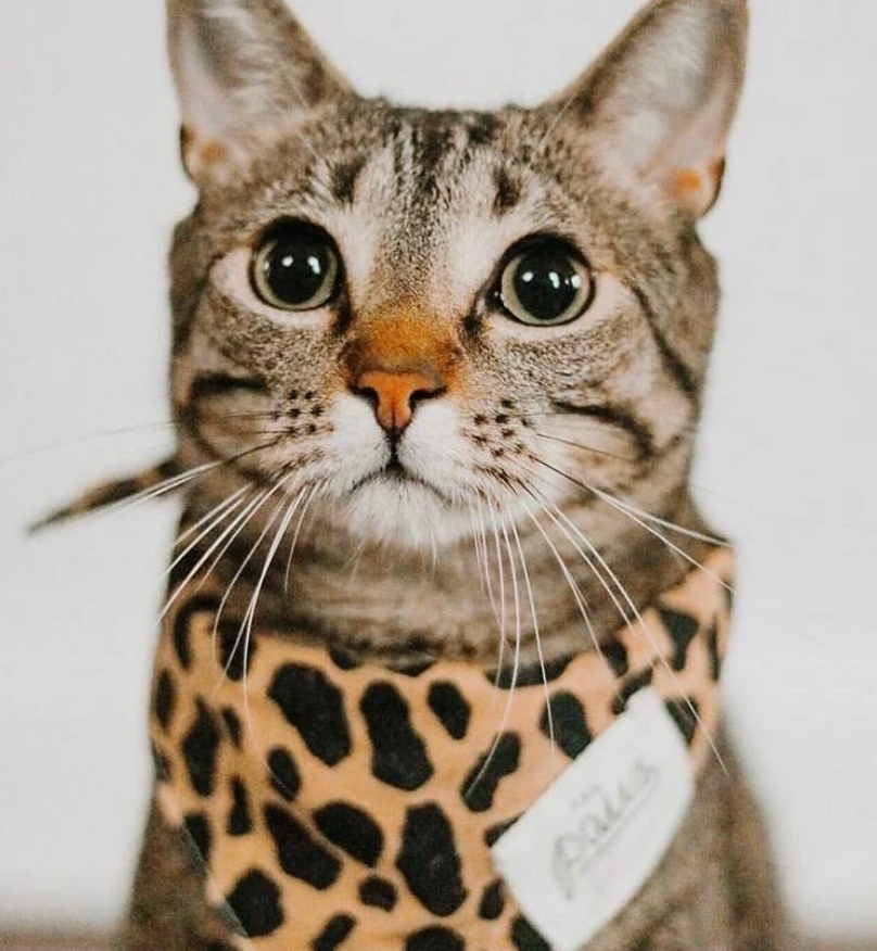 Cheetah Print Pet Bandana