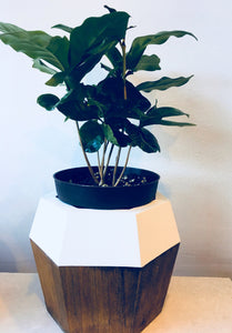 Two Tone Geometric Wood Planter