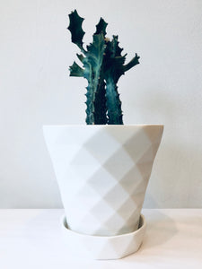 White Etched Diamond Planter with Plate