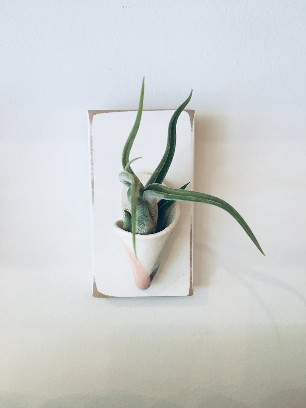 Airplant Holder on White Wooden Base