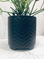 Black Beauty Planter
