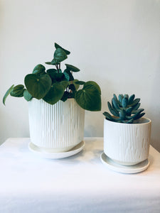 Margot Matte Planter with Plate