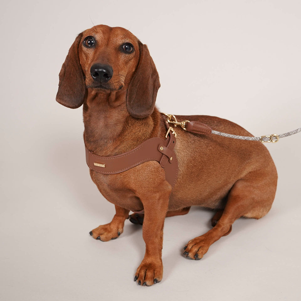 Collars, Harnesses and Accessories