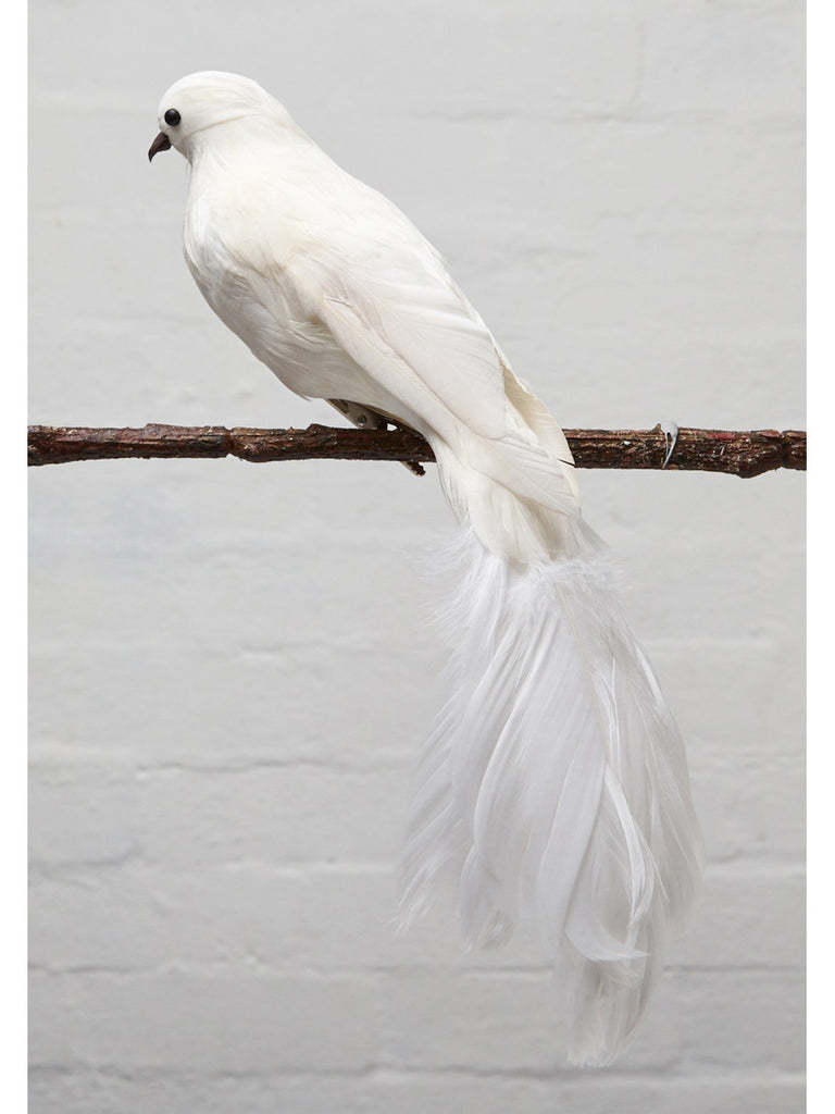White dove ornament - White Dove Hamptons House 1