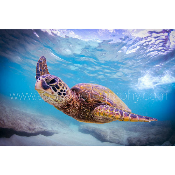 """Honu Magic"""