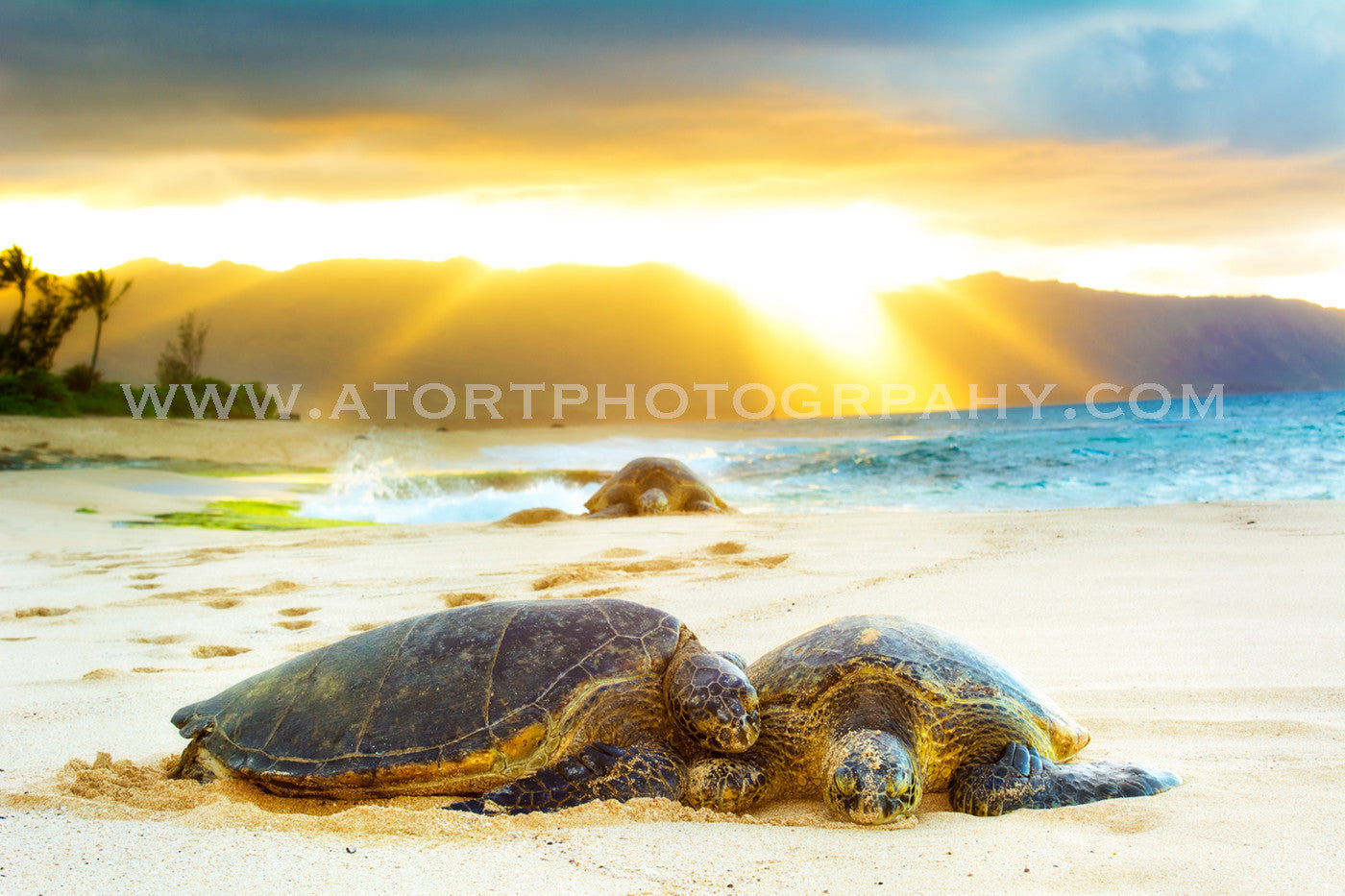 Honu Blessings