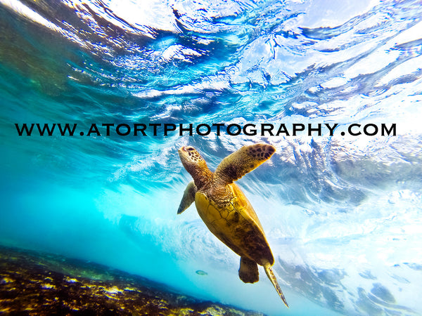 Honu Flight