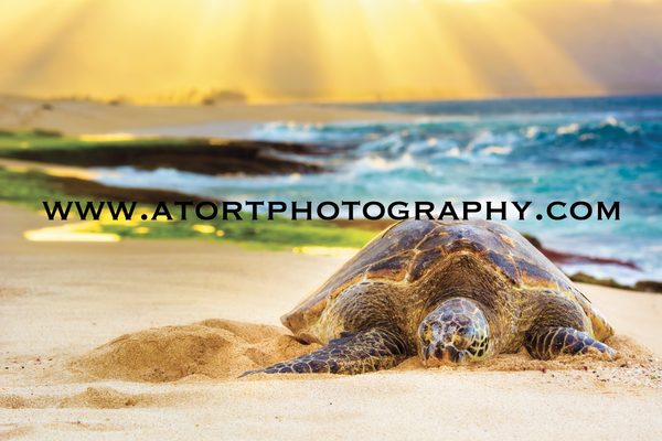 Heavenly Honu