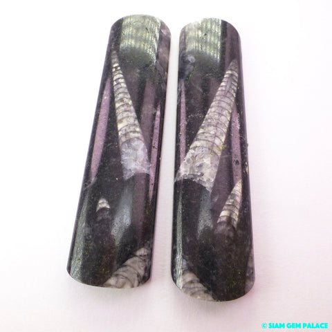 FOSSIL ORTHOCERAS. Natural Extinct Squid-Like CePHALOpod Fossil. Space Probes. MiRRORed PAiR. 2 pc. 160 cts. 18x70x5.5 mm (Fos1085) - Siam Gem Palace - 1