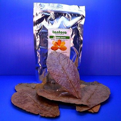 "50pcs 7""~12""Tantora Catappa Leaves Grd A Indian Almond Leaf KETAPANG aquarium"